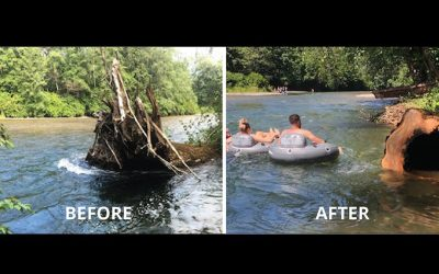 Dangerous Tree removed from Puntledge River